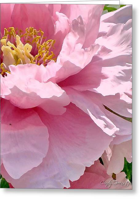 Greeting Card featuring the photograph Sunkissed Peonies 1 by Cindy Greenstein