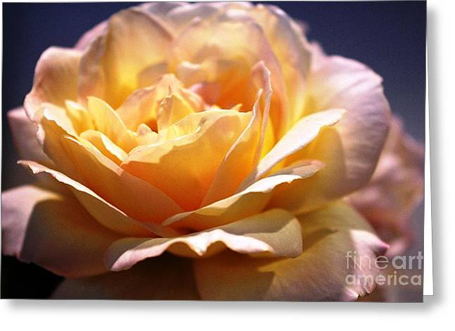Sunkissed Rose Greeting Card by Judy Palkimas