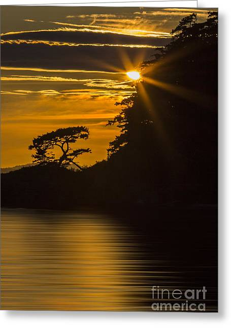 Sunkissed Greeting Card by Sonya Lang