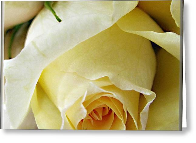 Sunkissed Yellow Rose Greeting Card