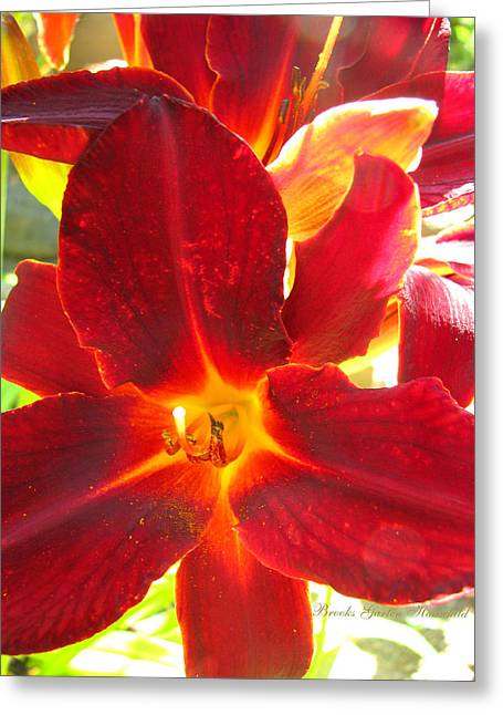 Greeting Card featuring the photograph Sunlight And Daylilies A Match Made In Heaven by Brooks Garten Hauschild