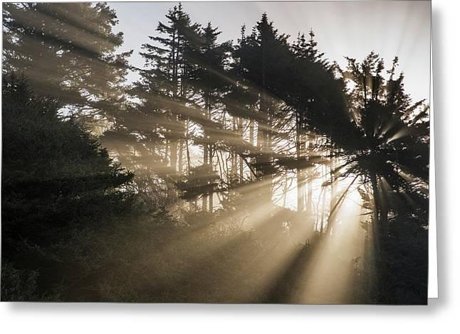 Sunlight Breaks Through The Fog Greeting Card