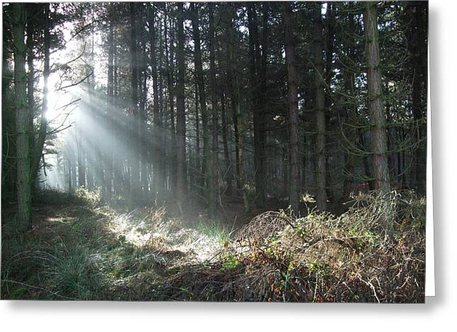 Greeting Card featuring the photograph Sunlight On Cannock Chase by Jean Walker