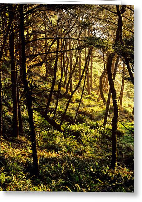Sunlight On Fern Plants Growing In Greeting Card by Panoramic Images
