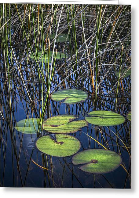 Sunlight On The Lilypads Greeting Card by Debra and Dave Vanderlaan