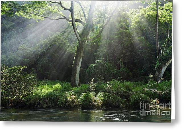 Sunlight Rays Through Trees Greeting Card by M Swiet Productions
