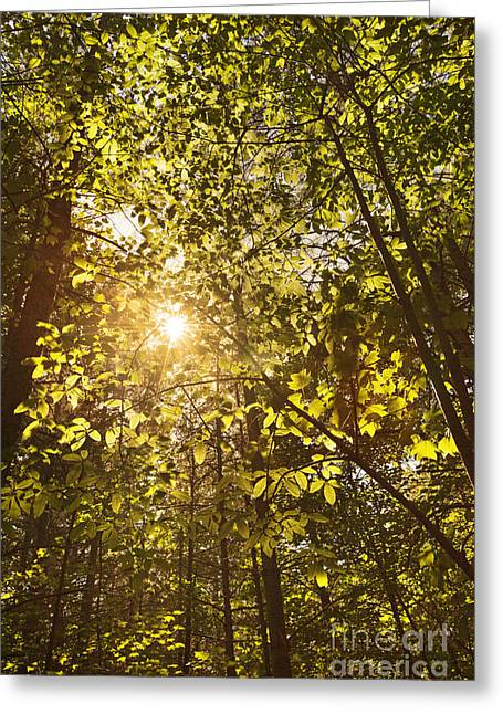 Sunlight Shining Through A Forest Canopy Greeting Card by Jonathan Welch