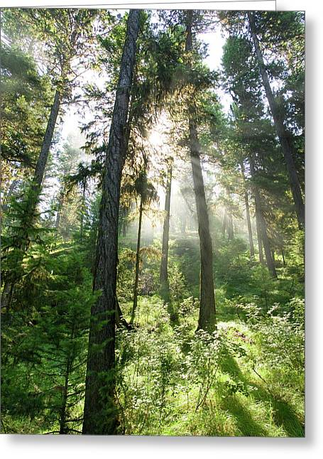 Sunlight Shining Through Forest Canopy Greeting Card