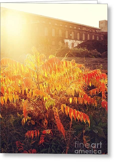 Sunlight Through The Ruin Greeting Card by HD Connelly