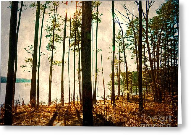 Sunlight Through The Trees Greeting Card