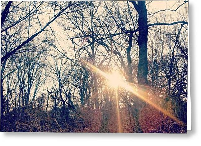 Sunlight Through The Trees Greeting Card by Genevieve Esson