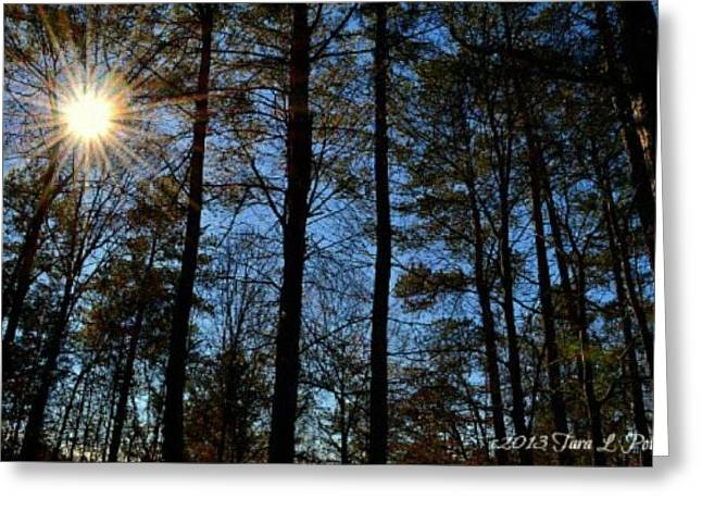 Greeting Card featuring the photograph Sunlight Through Trees by Tara Potts