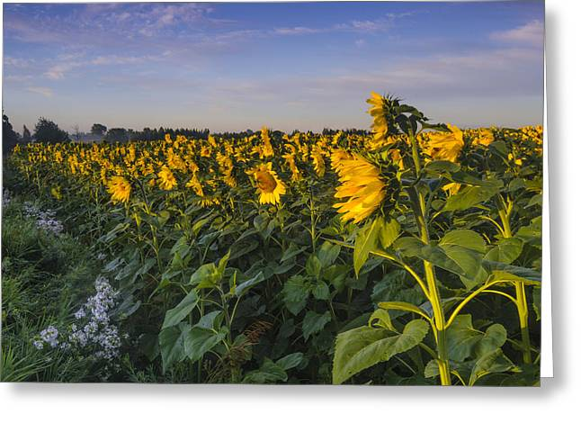 Sunlit Faces Greeting Card by Thomas Pettengill