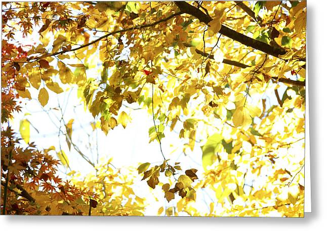 Sunlit Leaves Greeting Card by Les Cunliffe