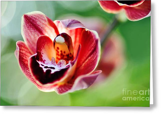 Sunlit Miniature Orchid Greeting Card