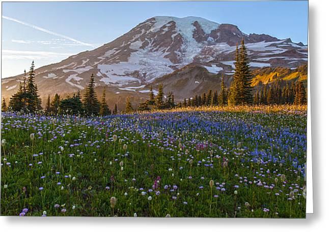 Sunlit Rainier Meadows Greeting Card by Mike Reid