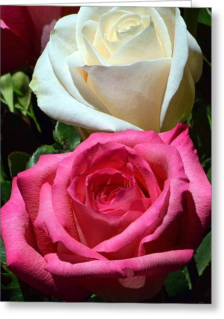 Sunlit Roses Greeting Card by Marie Hicks