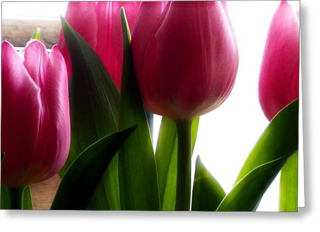 Sunlit Tulips Greeting Card