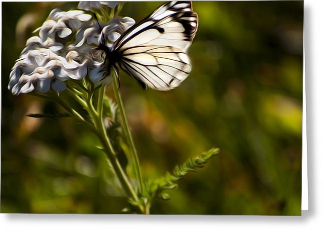 Greeting Card featuring the digital art Sunlit Wings by Timothy Hack