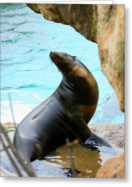 Sunning Sea Lion Greeting Card by Angela Rath