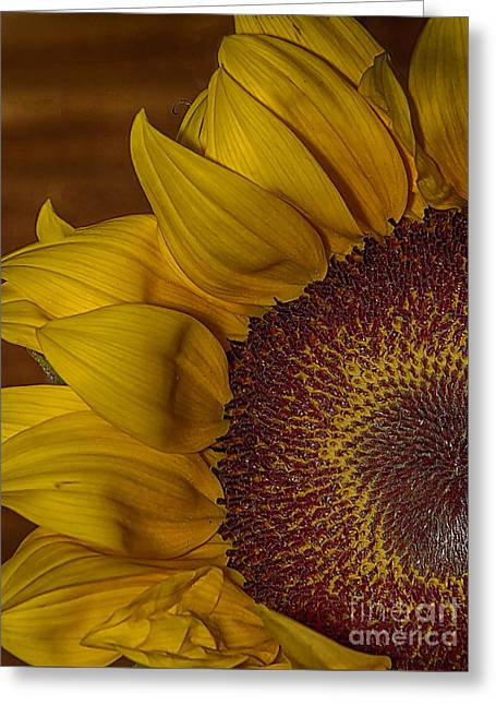 Sunny Greeting Card by Anne Rodkin
