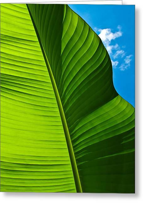 Sunny Banana Leaf Greeting Card