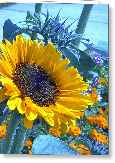 Sunny Blue Greeting Card