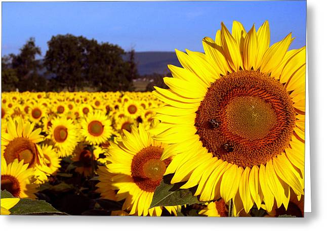 Sunny Day II Greeting Card by Meaghan Troup