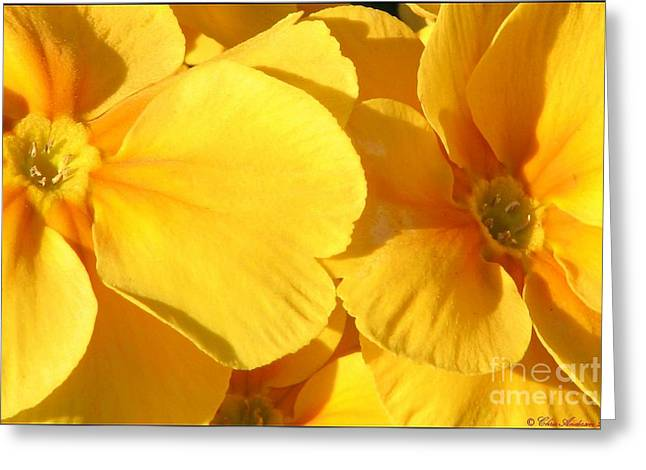 Sunny Disposition Greeting Card by Chris Anderson