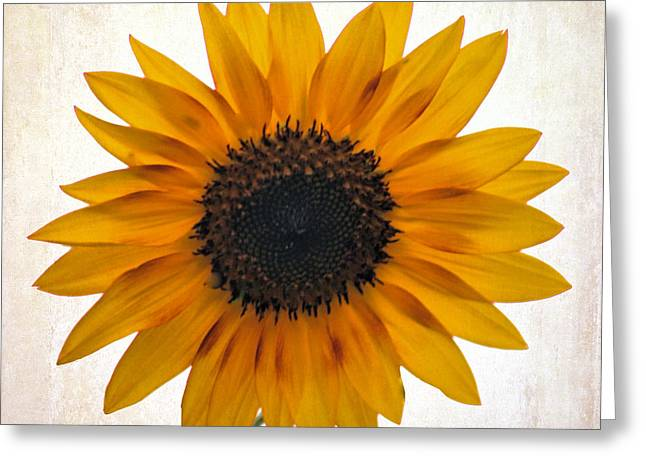 Sunny Disposition Greeting Card by Tammy Espino