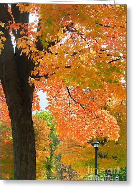 Greeting Card featuring the photograph Sunny Fall Day By David Lawrence by David Perry Lawrence