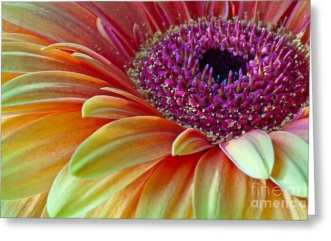 Sunny Gerber 2012 Greeting Card