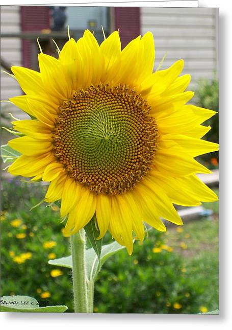 Greeting Card featuring the photograph Bright Sunflower Happiness by Belinda Lee
