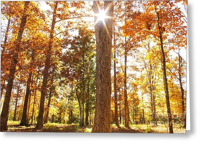 Sunny Hardwoods Greeting Card