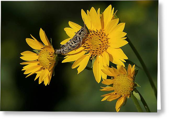 Sunny Hopper Greeting Card by Ernie Echols