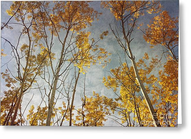 Sunny Leaves Wide Greeting Card