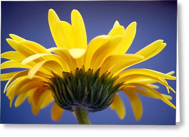 Sunny Love Greeting Card by Melanie Moraga