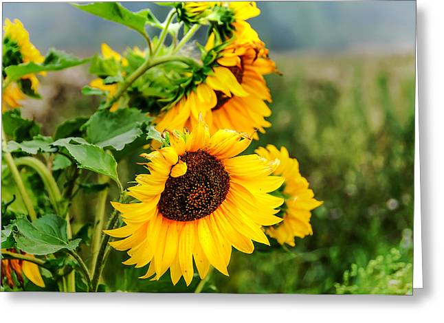 Sunny Meadow 1 Greeting Card by Jenny Rainbow