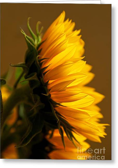 Sunny Profile Greeting Card by Bob and Nancy Kendrick