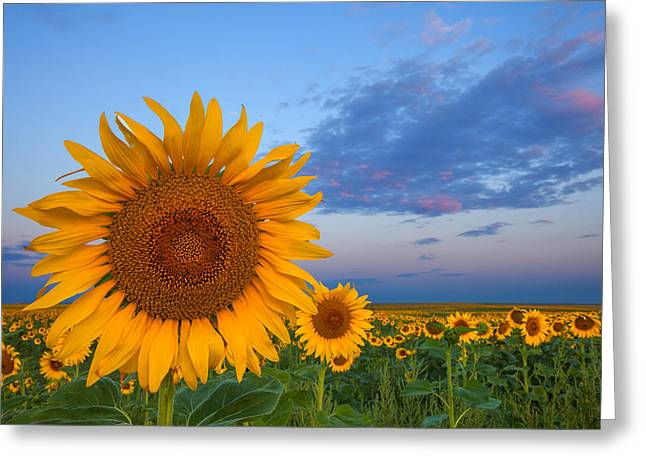 Sunny Side Up Greeting Card by Darren  White