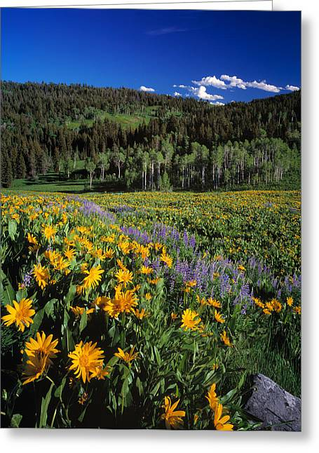 Sunny Spring Day Greeting Card by Leland D Howard
