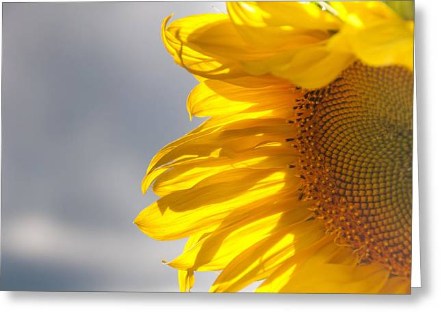Greeting Card featuring the photograph Sunny Sunflower by Cheryl Baxter