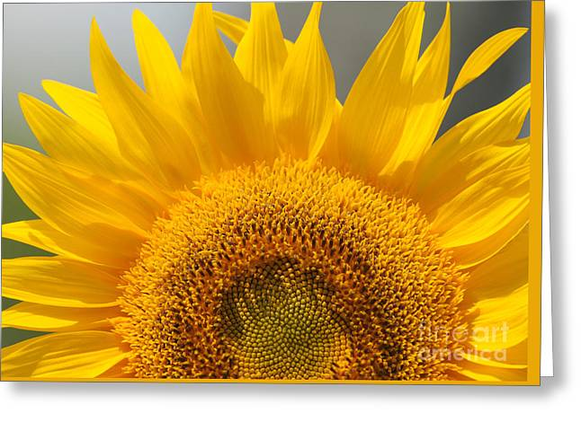 Sunny Sunflower Greeting Card by Olivia Hardwicke