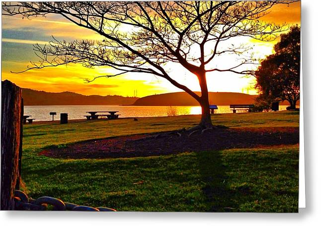 Sunny Tree Greeting Card by Brian Maloney