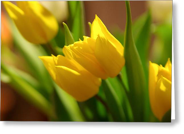 Greeting Card featuring the photograph Sunny Tulips by Erin Kohlenberg