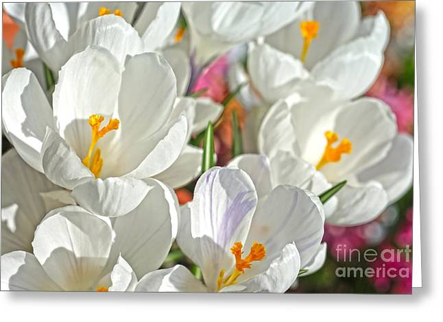 Sunny White Flowers Greeting Card by Nur Roy