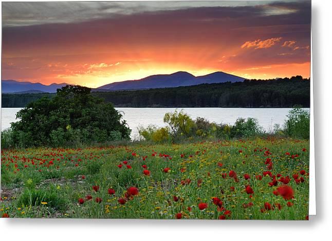 Sunrays At The Lake Greeting Card