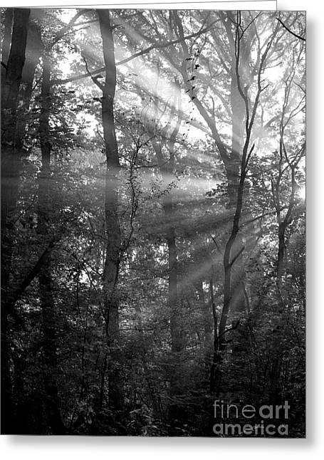 Sunrays Through The Trees In Black And White Greeting Card by Natalie Kinnear