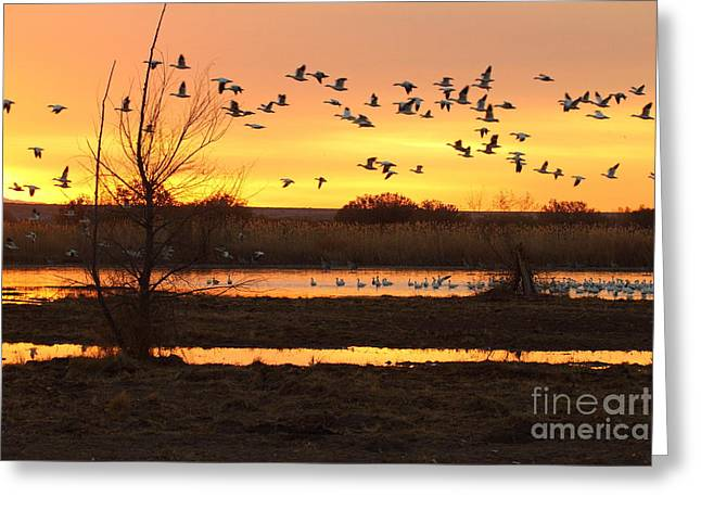 Greeting Card featuring the photograph Sunrise And Geese by Ruth Jolly