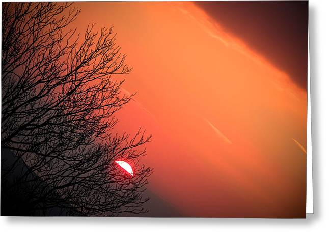 Sunrise And Hibernating Tree Greeting Card